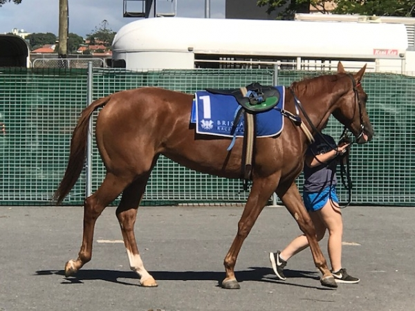 Global Choice at the Doomben barrier trials (6th February)